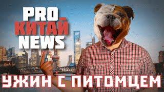 Русские выступают против поедания собак в Азии! О ежегодном фестивале в Юйлинь [Pro Китай News]