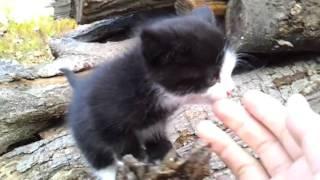불쌍한 귀여운 아기고양이