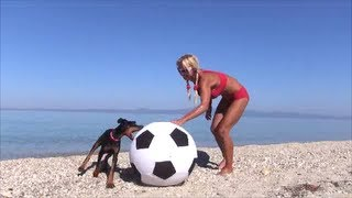 Doberman Puppy Loves Soccer!