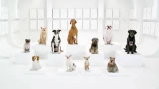 Тайная жизнь собак поющие собаки РOLLI DI