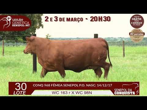 LOTE 30 CONQ 968