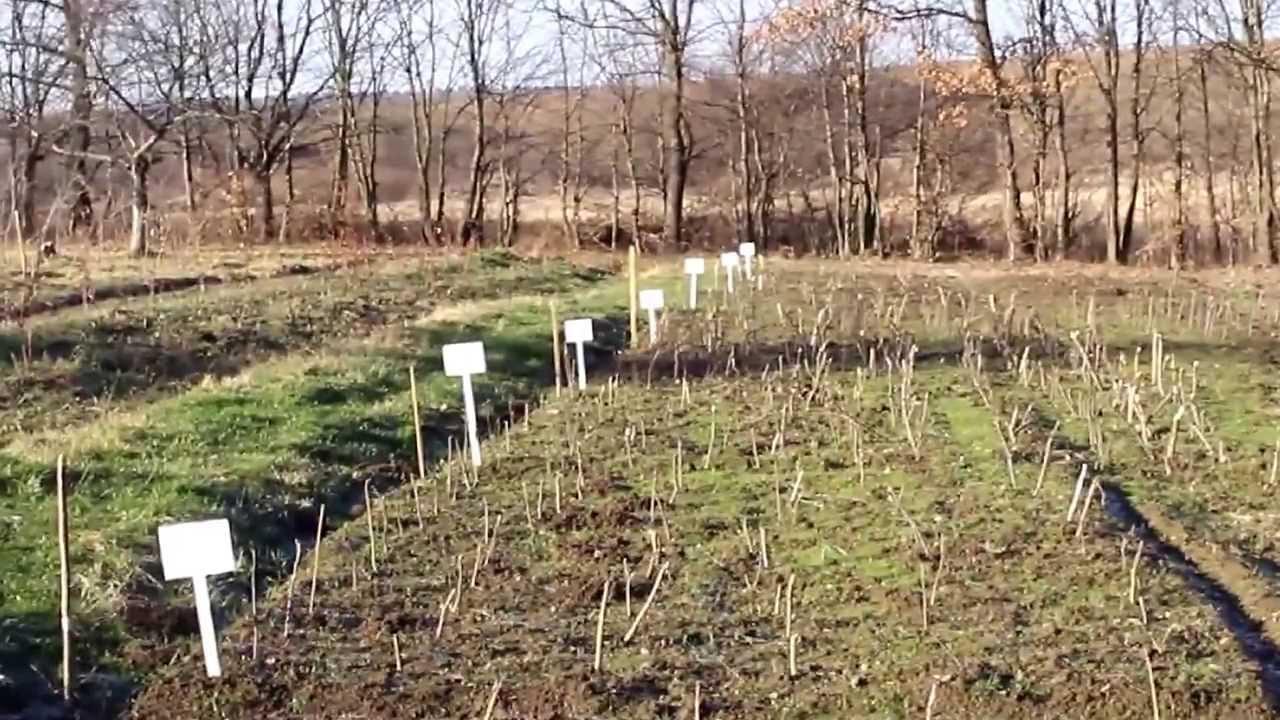 Из-за отсутствия снега фруктовые сады в Украине могут погибнуть