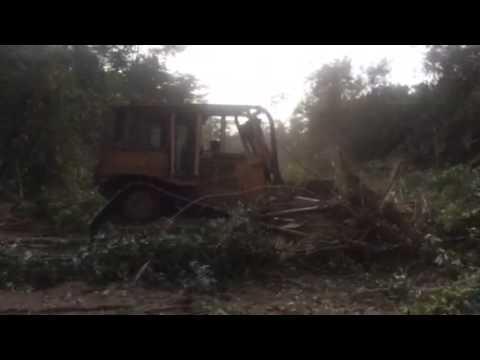 Jungle road building Belize