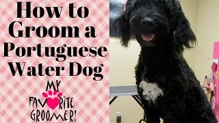 Grooming a Portuguese Water Dog thumbnail