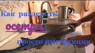 Осётр, как просто почистить и разделать,  видео-инструкция, жареный осетр