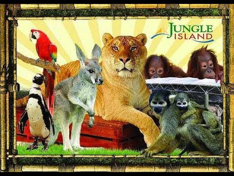Zoo Parrot Jungle in Miami Amazing Animals