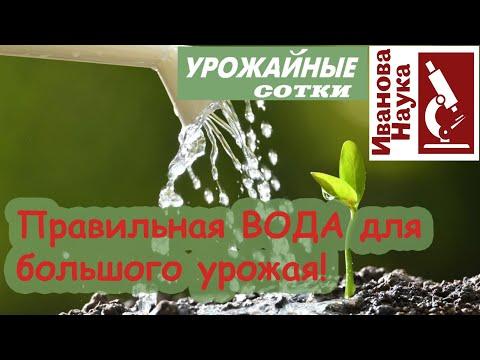 Не всходят семена и не растет рассада? Виноватой может быть вода!