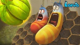 Larva Cartoon Full Movie 2019 | Gum 1 2 | Cartoons For Children