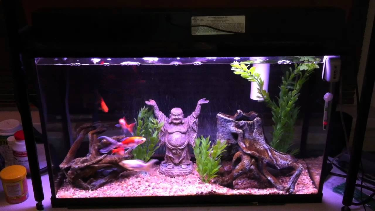Aquarium that requires no water changes youtube for How to keep fish tank clean without changing water
