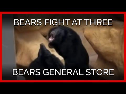 Bears Fighting at Three Bears General Store