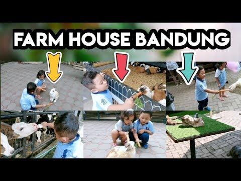 seru..!!!-kasih-makan-binatang-di-farmhouse-lembang-|-wisata-bandung-|-kelvin-dan-chelsea