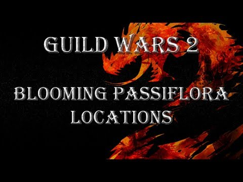 Gw2 Blooming Passiflora Locations Youtube