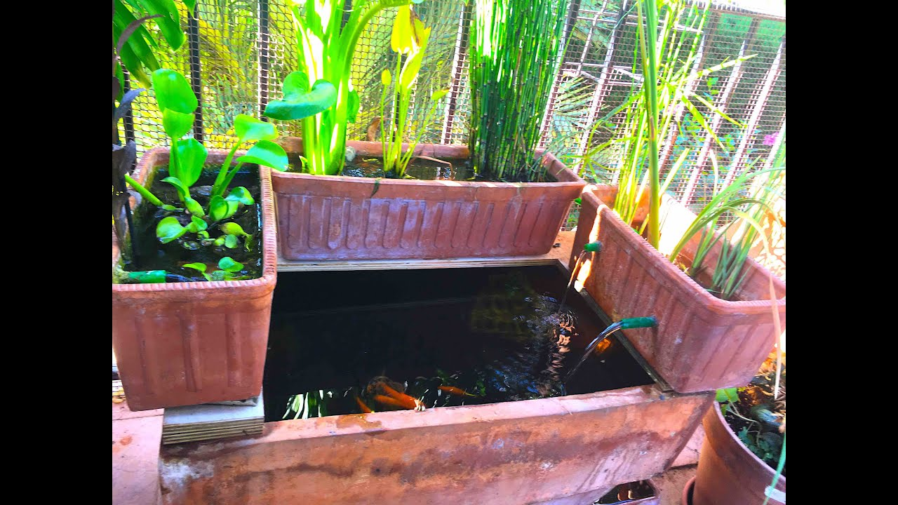 Como hacer un estanque en una maceta youtube for Como hacer un estanque economico