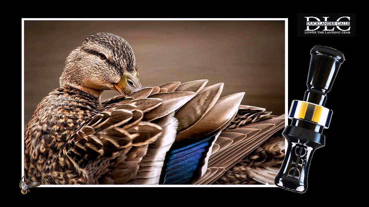 spitfire duck call. ducklander calls - conartist duck call spitfire