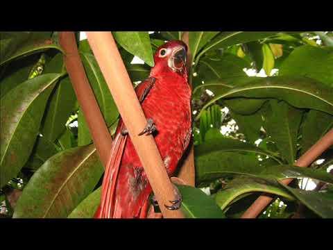 Tongi(promise)  - Zenlord ft Squid Tikopia Solomon Islands music