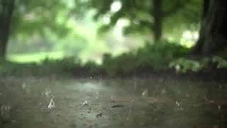 10 hours of rain in slow motion with thunder sounds
