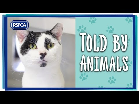 What did the RSPCA achieve in 2016?