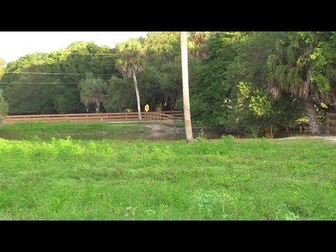 SWFL Eagles_Lush Grasses & Full Ponds But No Eagles 06-23-17