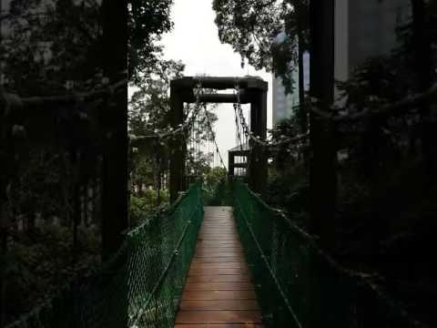 JohnsonMalaysiaTour - Bukit Nanas Forest Reserve