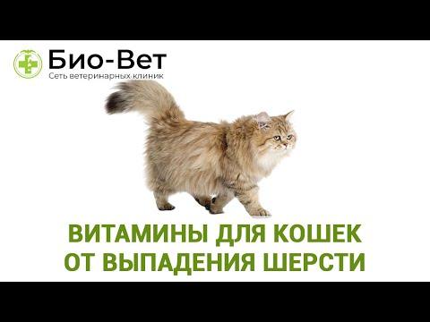 Вопрос: Чем для кошек опасно ношение свалявшейся шерсти?