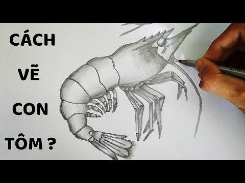 Vẽ Con Tôm bằng bút chì cực chuẩn – How to draw shrimp