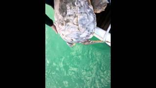 Video liberate altre 5 tartarughe! download MP3, 3GP, MP4, WEBM, AVI, FLV November 2017