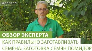 видео Семена Томатов