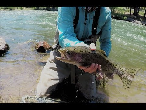 Fishing the Truckee River
