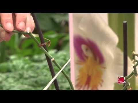 Uzgoj i njega prekrasnih orhideja
