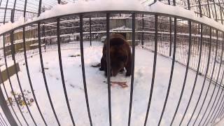 Zimowe Niedźwiedzie - Schronisko w Korabiewicach