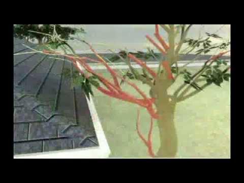 Cómo hacerlo -- protección contra incendios forestales thumbnail