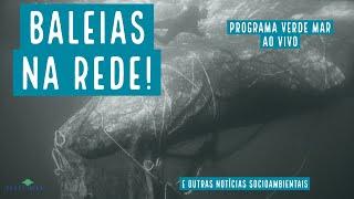 Baleias presas em redes de pesca na costa brasileira e mais notícias...