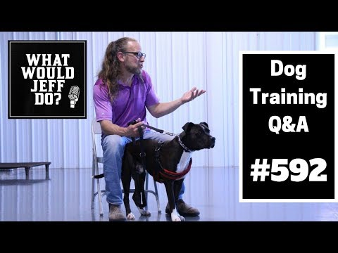 dog-training---dog-separation-anxiety---training-a-puppy---what-would-jeff-do?-q&a-ep.592-(2019)
