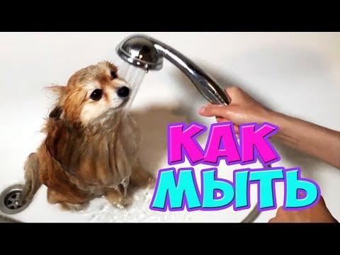 Как часто нужно мыть шпица