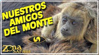 (3-11) Reserva Natural Isla Las Damas (Goya, Corrientes, Argentina) - Zona Safari TV