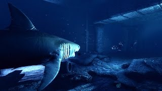 Depth PC 60FPS Gameplay | 1080p