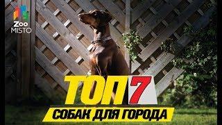 Топ 7 собак для города \ Top 7 dogs for the city