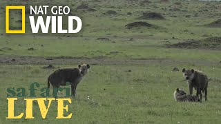 Safari Live - Day 63 | Nat Geo WILD thumbnail
