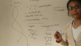 DNA( Deoxyribonucleic acid)
