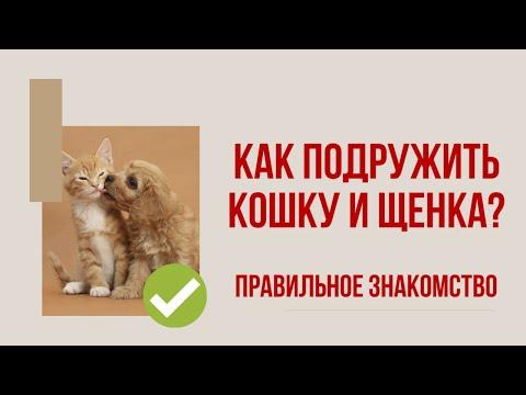 Вопрос: Как подружить кота с щенком?