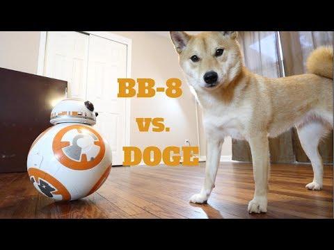 Dog vs. REAL Star Wars BB8
