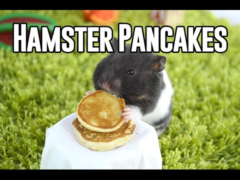 Tiny Hamster Eating Tiny Pancakes
