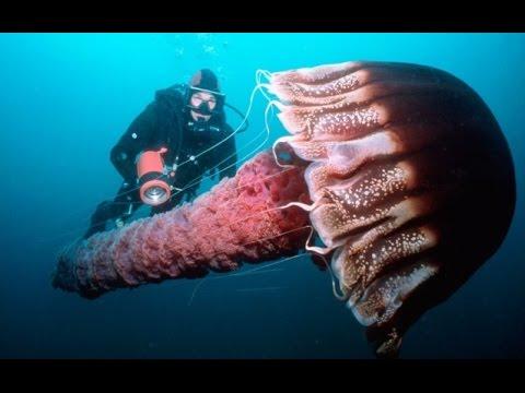 Ядовитая медуза в черном море