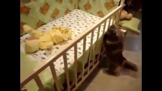 Смешные кошки и котята! Прикольное видео про кошек! Милотка
