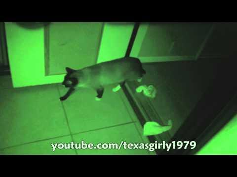 CAT Sleepwalking with Socks!!