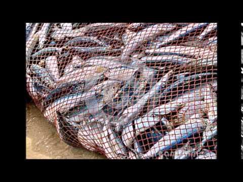 Preventing Bycatch- PSA by Zach Lieberman