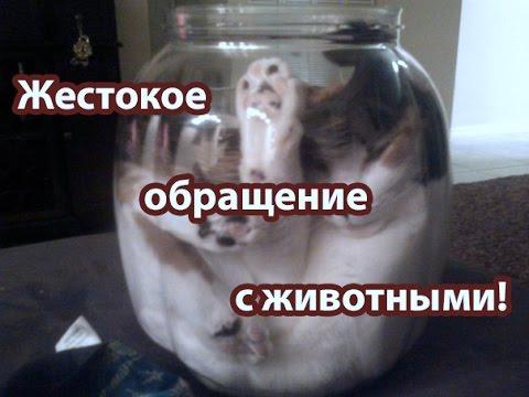 PrankRu Официальный пранксайт России