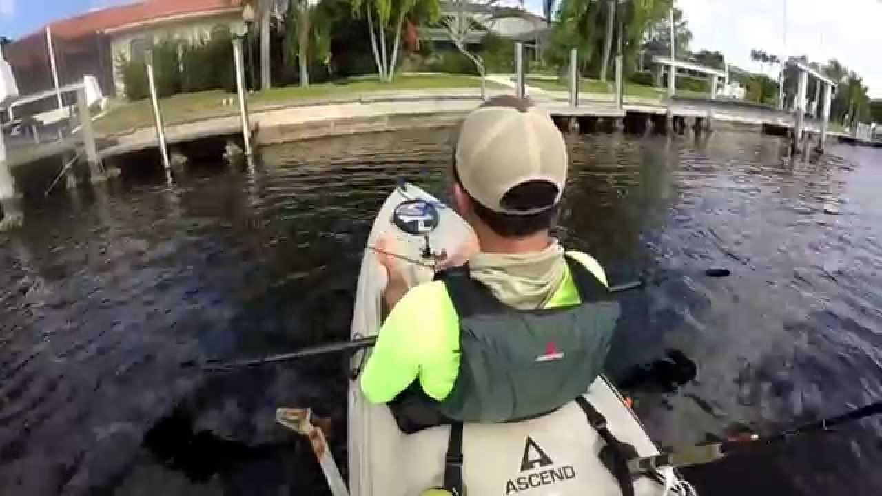 Snook fishing punta gorda youtube for Punta gorda fishing