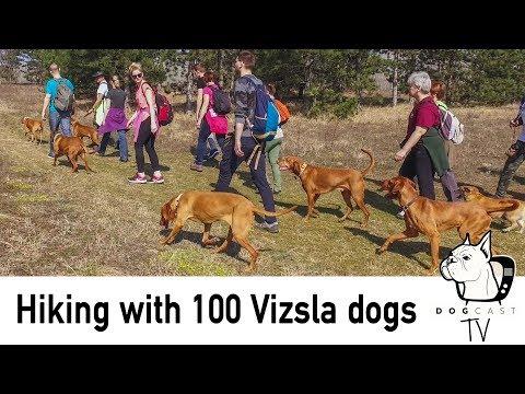 Vizsla Túra - séta 102 vizslával DogCast TV S02E07