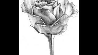 Как нарисовать розу(в этом видео я научу вас рисовать розу как нарисовать розу поэтапно карандашом в разных вариациях) если..., 2013-03-30T09:57:34.000Z)
